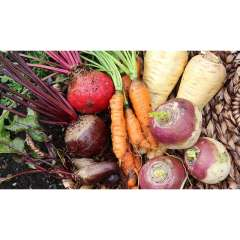 Cookstown Greens Premium Root Veg
