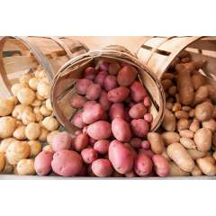 Potato, Organic Bulk 50lb ON (while supply lasts)