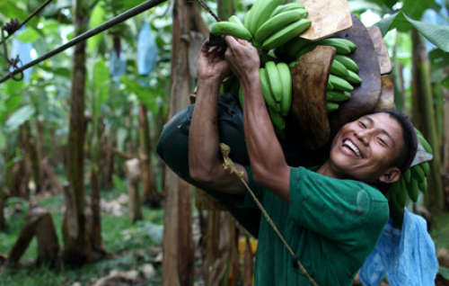 Why we only bring in Fair-Trade Banana