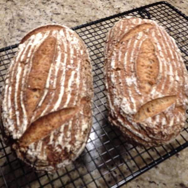 There and back again...a journey of sourdough bread